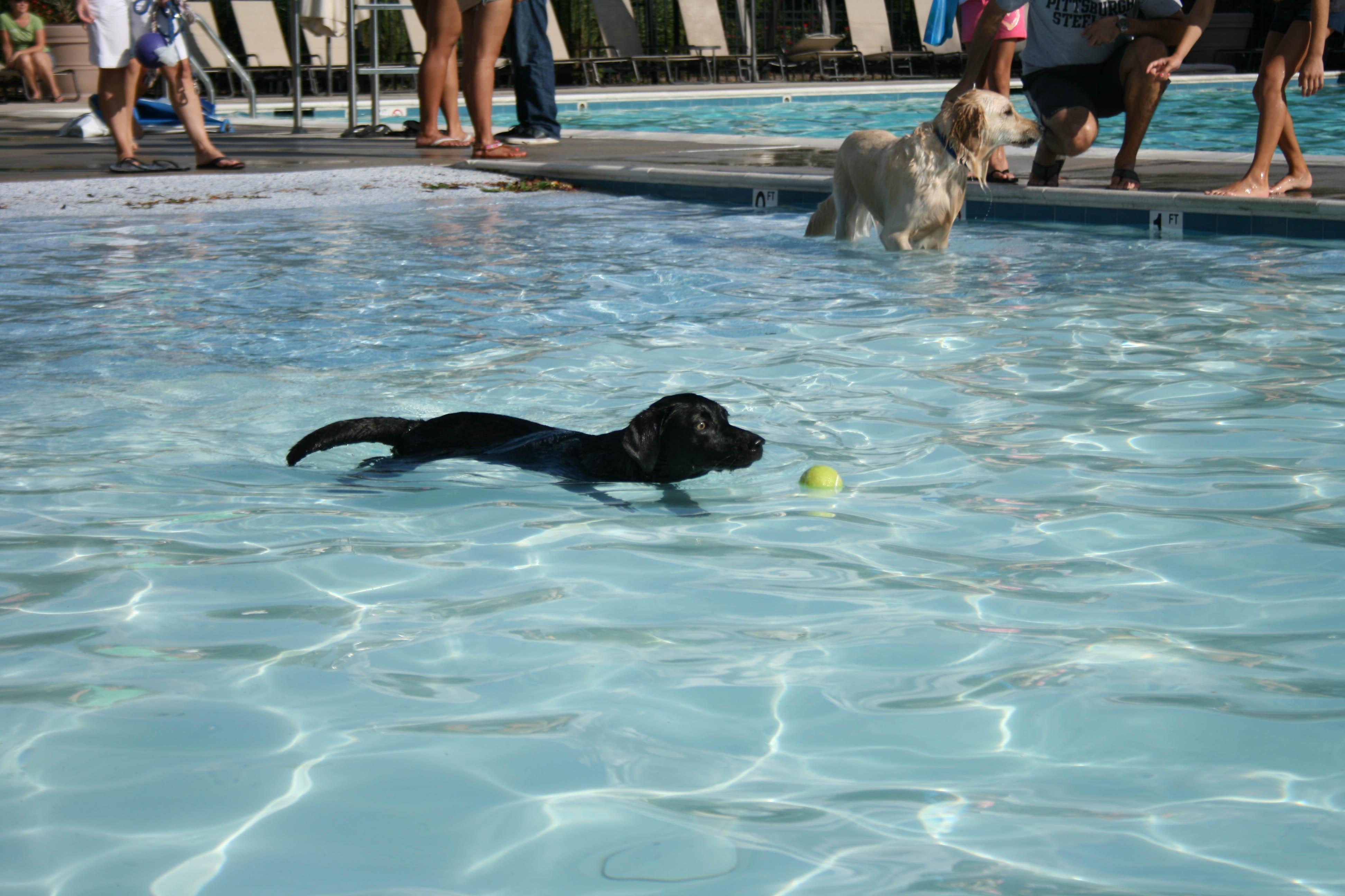 Doggone Wild Pool Party Brambleton Community Association Va